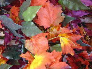 391883_autumn_colors.jpg