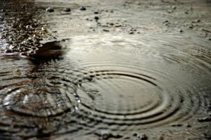 901702_raindrops_in_puddle.jpg