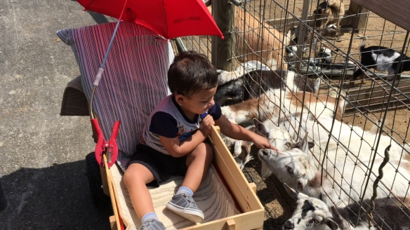 Timothy petting the goats in the spiffed-up wagon Granddad put together for him.
