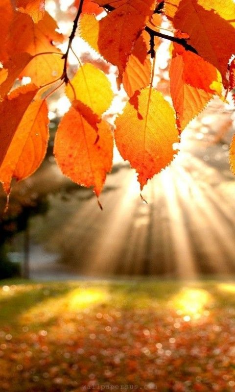autumn-light